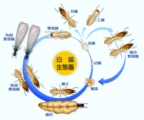 白蟻   [組圖+影片] 的最新詳盡